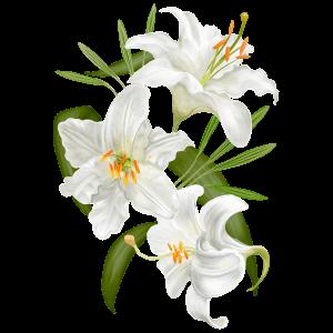 Lilie Geburtsblume